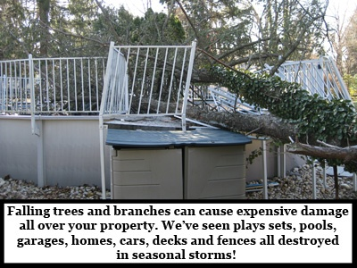 Catastrophic-Storm-Damage-tree-on-pool