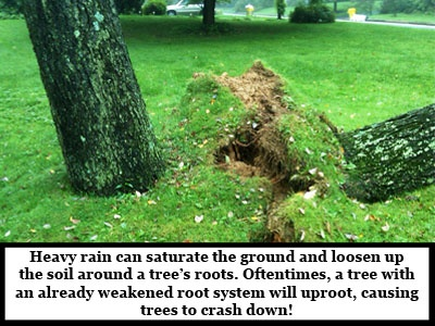 Catastrophic-Storm-Damage-uprooted-tree