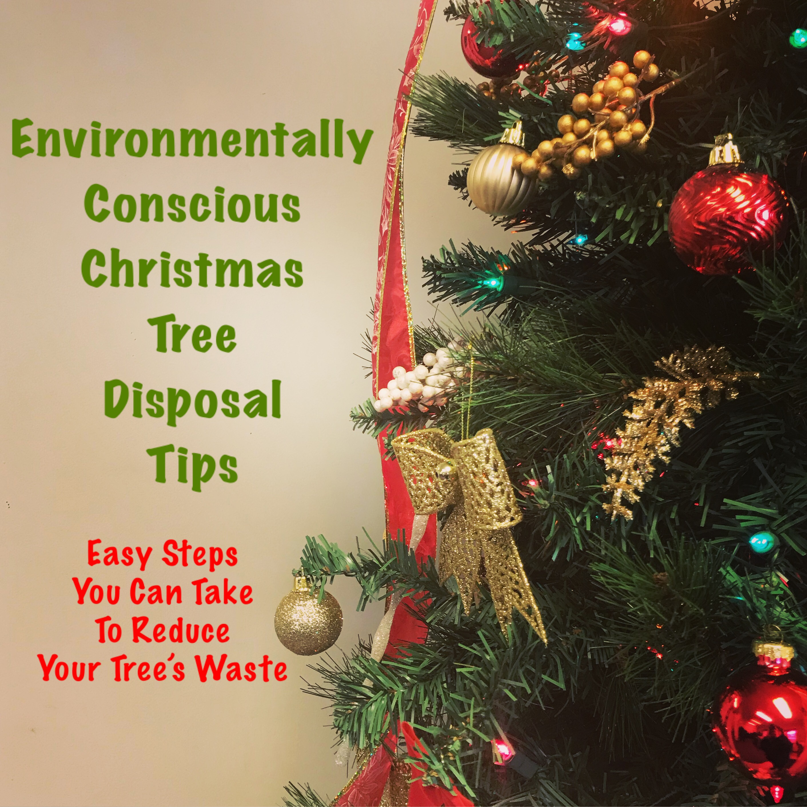 Disposing Of Christmas Trees: Environmentally Conscious Christmas Tree Disposal Tips