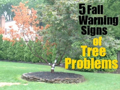Fall Warning Signs of Tree Problems-1
