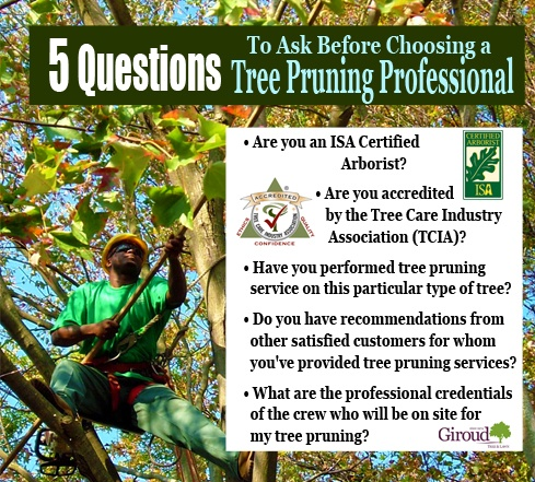 4 Reasons why fall is a great time to prune your trees 5 Questions to Ask before choosing a tree pruning professional