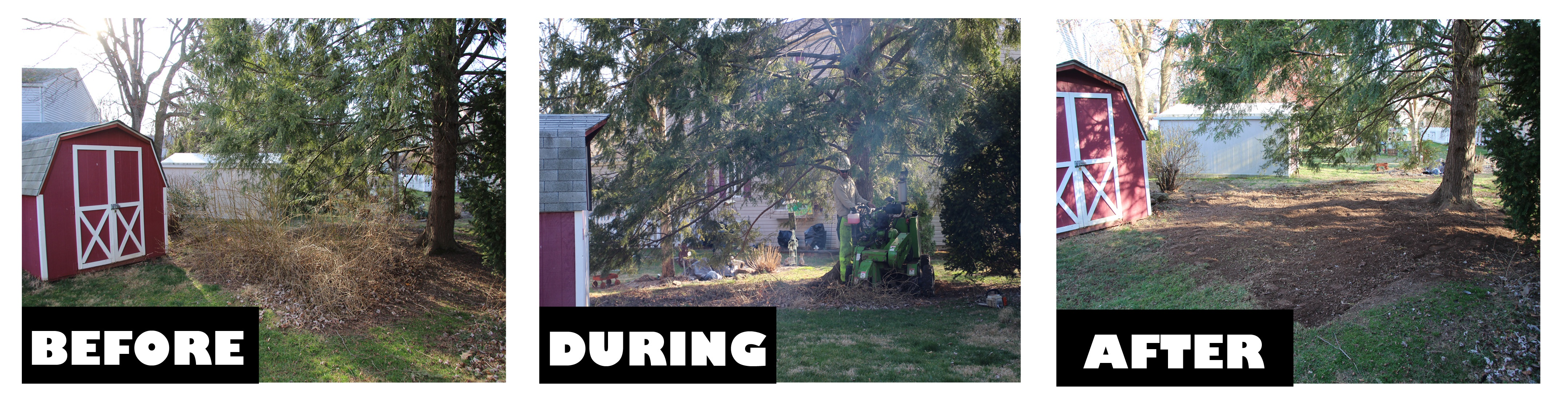 Video shows Spring Cleanup of yard including dead tree removal and stump removal
