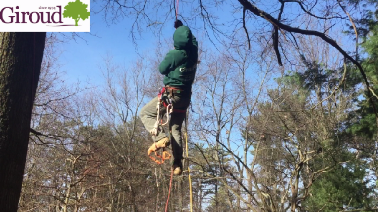 Wes Abler demonstrates how to climb a tree using a cross between a single rope and double rope system.
