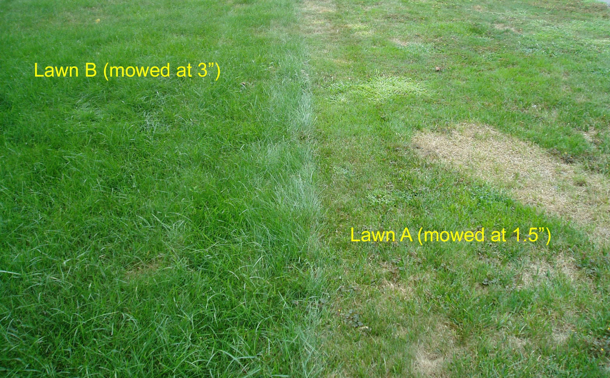 Lawn Mowing Comparison between Lawns Mowed High vs. Low