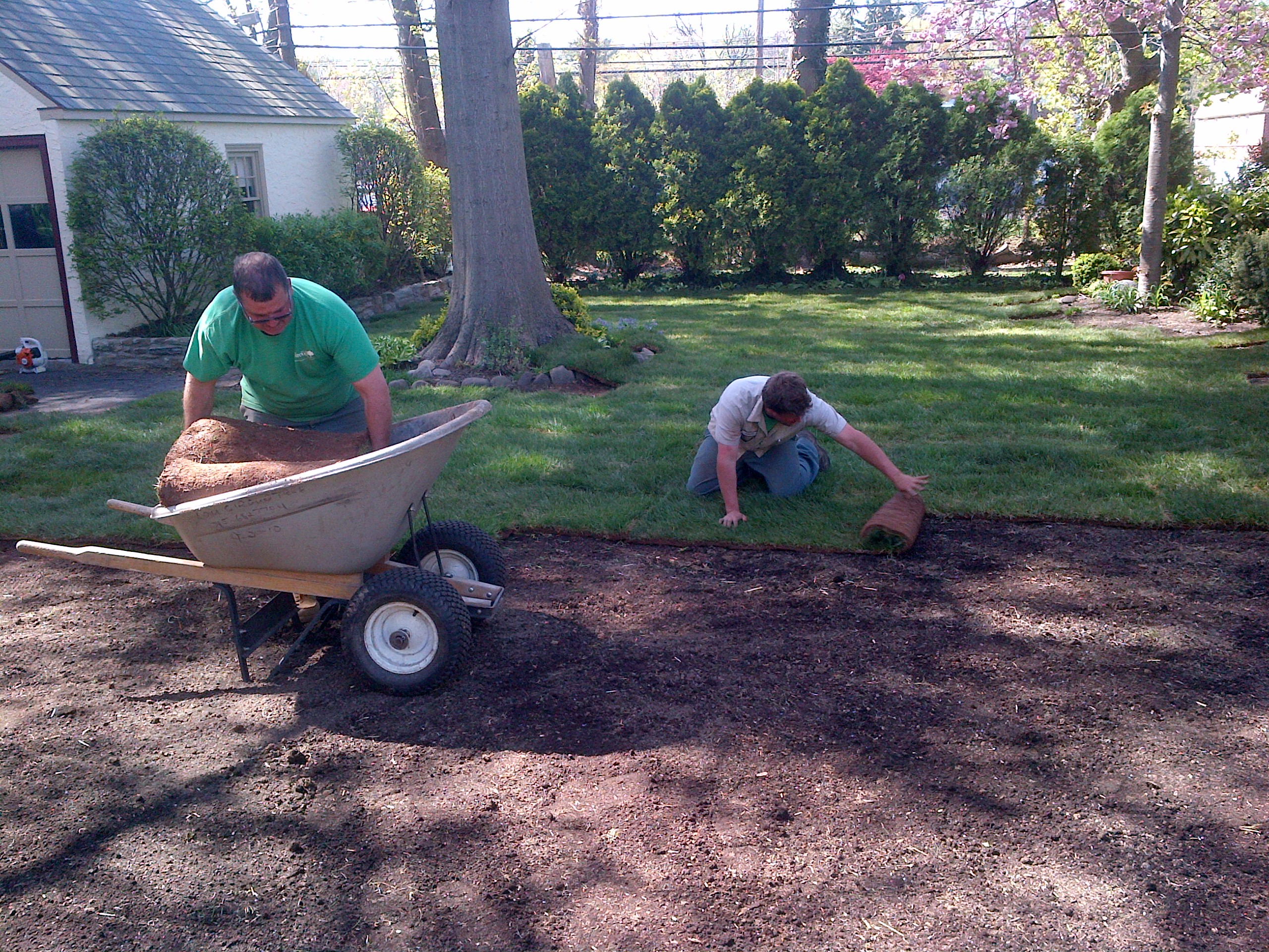 Laying down sod after complete lawn renovation to create a beautiful new lawn.