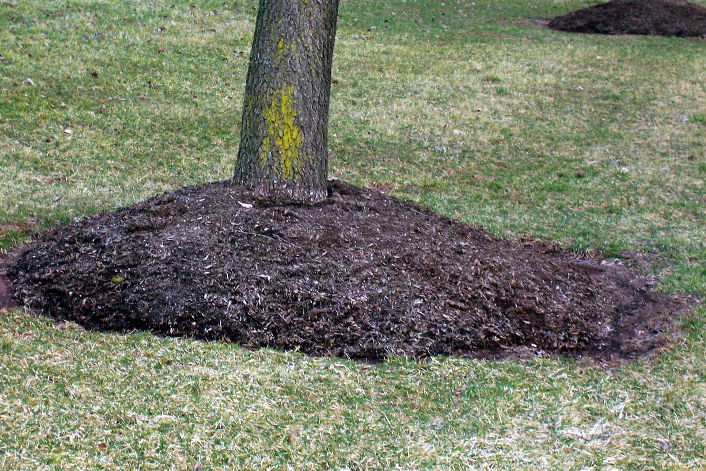Don't over-mulch either! You can suffocate your tree or shrub's root system. Two inches of mulch should be plenty.