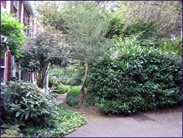 Overgrown Shrubs Require Pruning or Removal