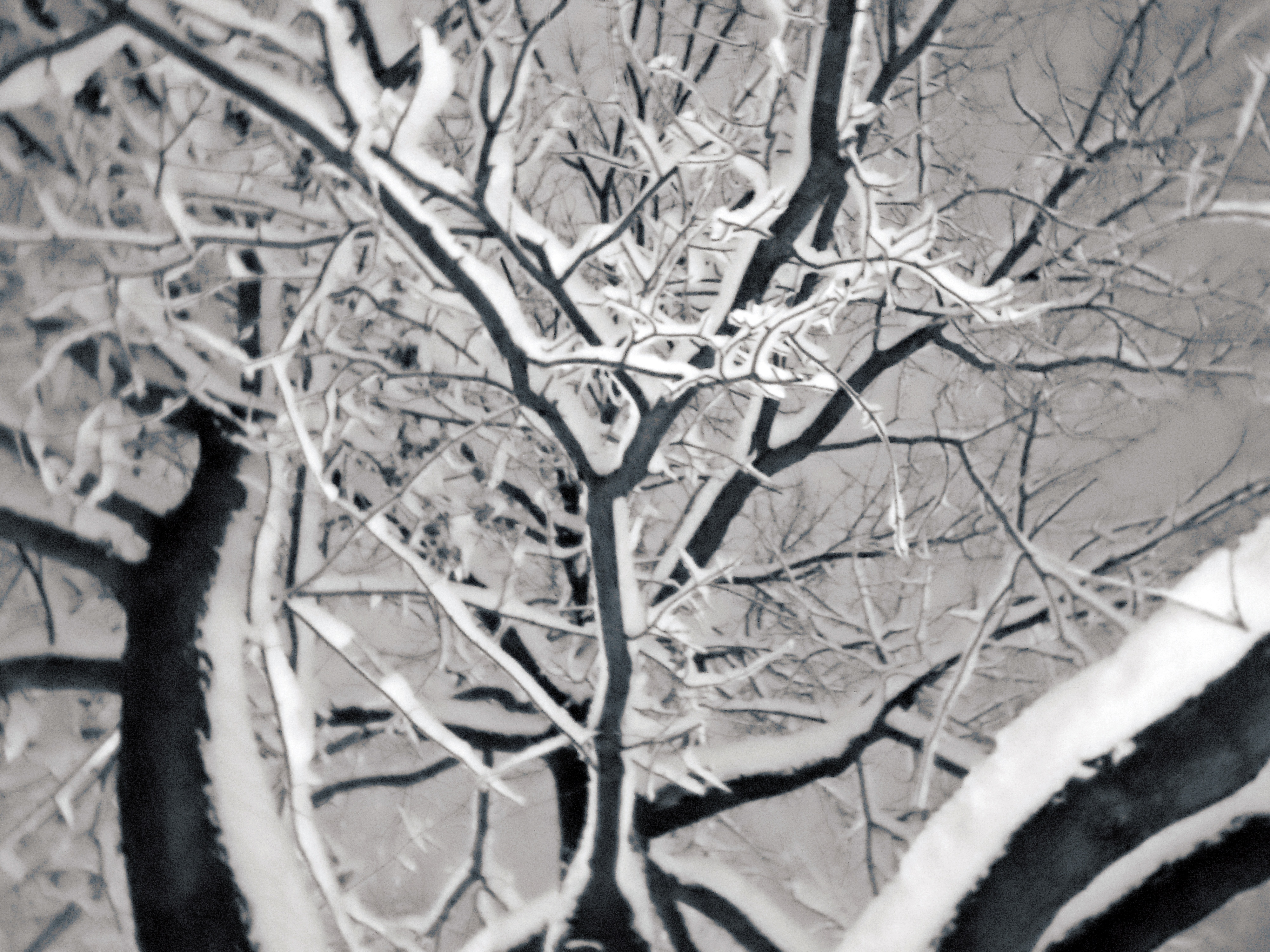 Snow and ice can weigh down weak or dead branches, creating a falling hazard.