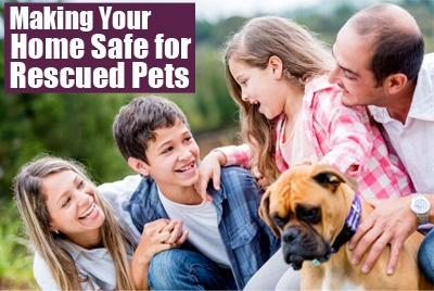 Making home safe for rescued pets
