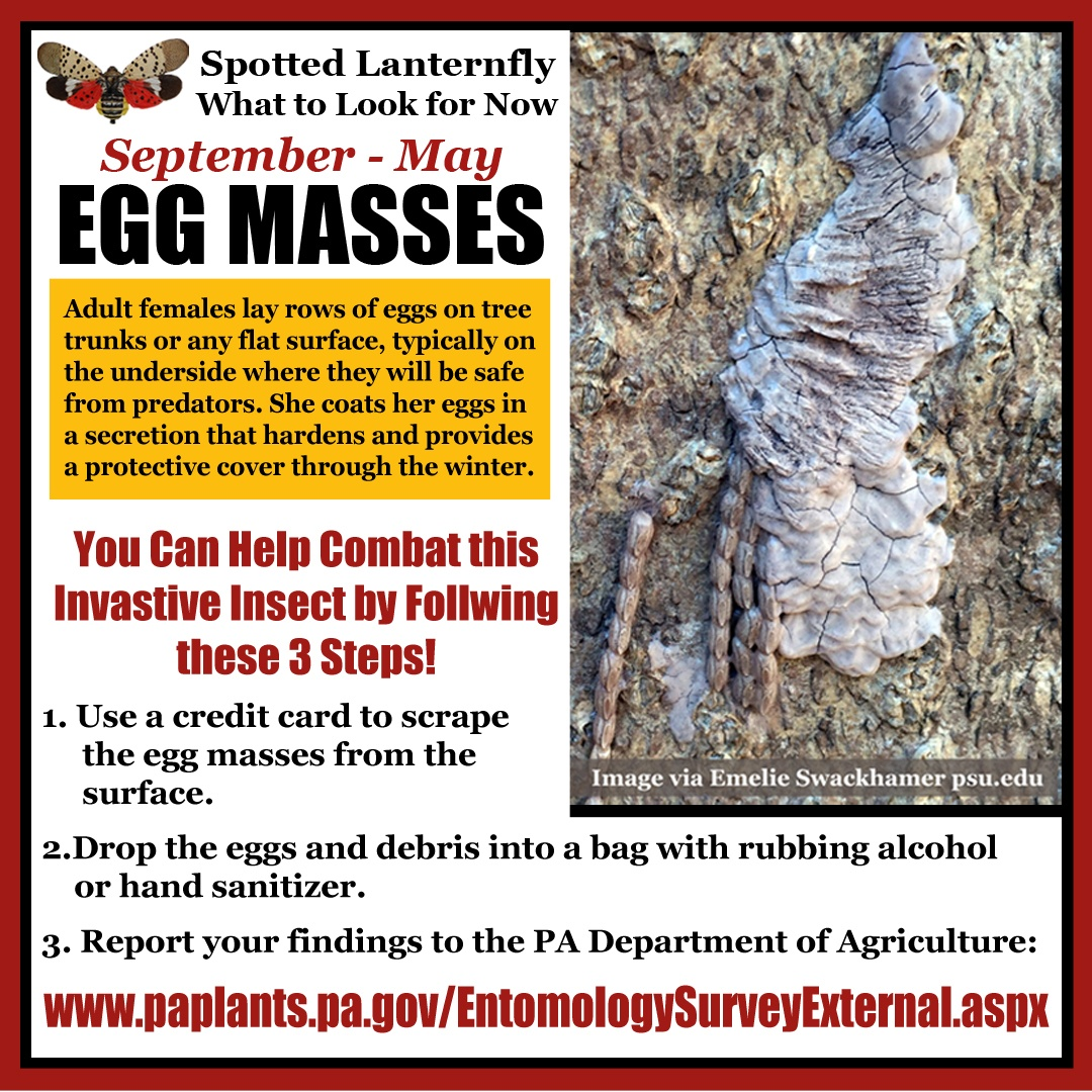 TO POST! SLF Egg Masses Instagram