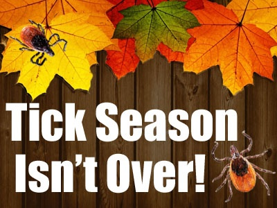 Tick Season isn't over in autumn fall