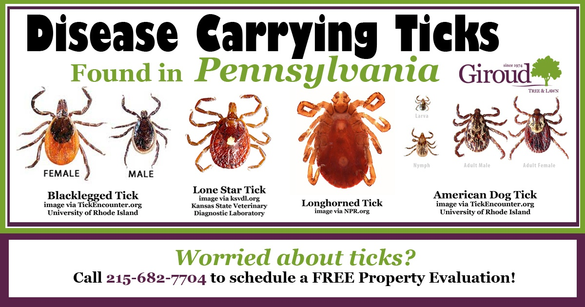 Ticks-Disease-Carrying-Found-in-PA-Facebook