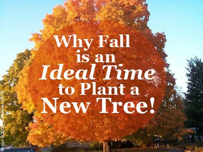 Why Fall is a Great Time to Plant a New Tree