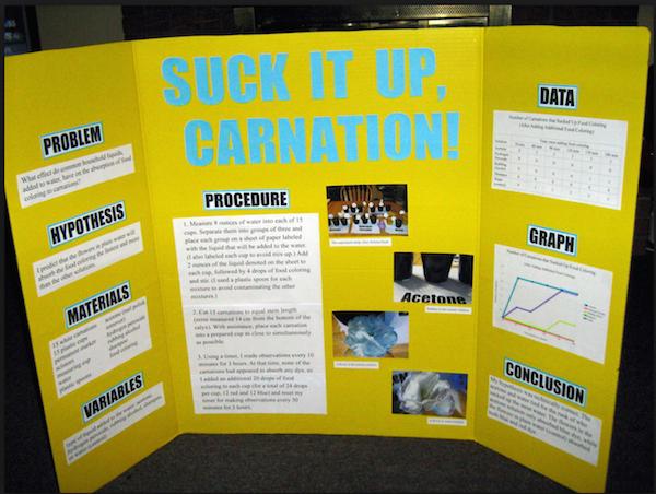 scientific method middle school worksheet