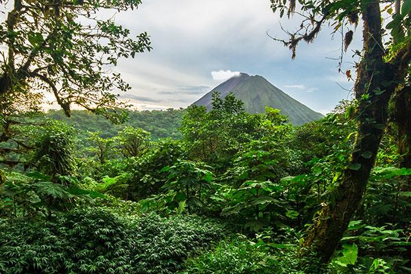 Desechos de café: pueden ayudar a crecer bosques.