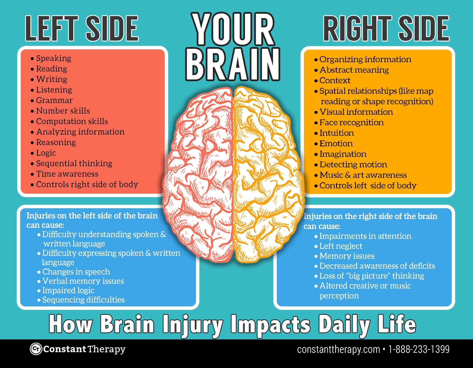 Left side vs. right side of brain | brain injury or stroke