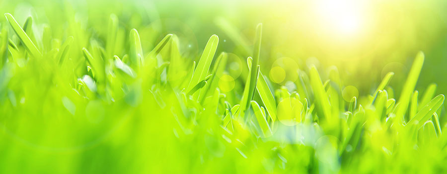 The grass and bottom line ARE greener with reprocessing