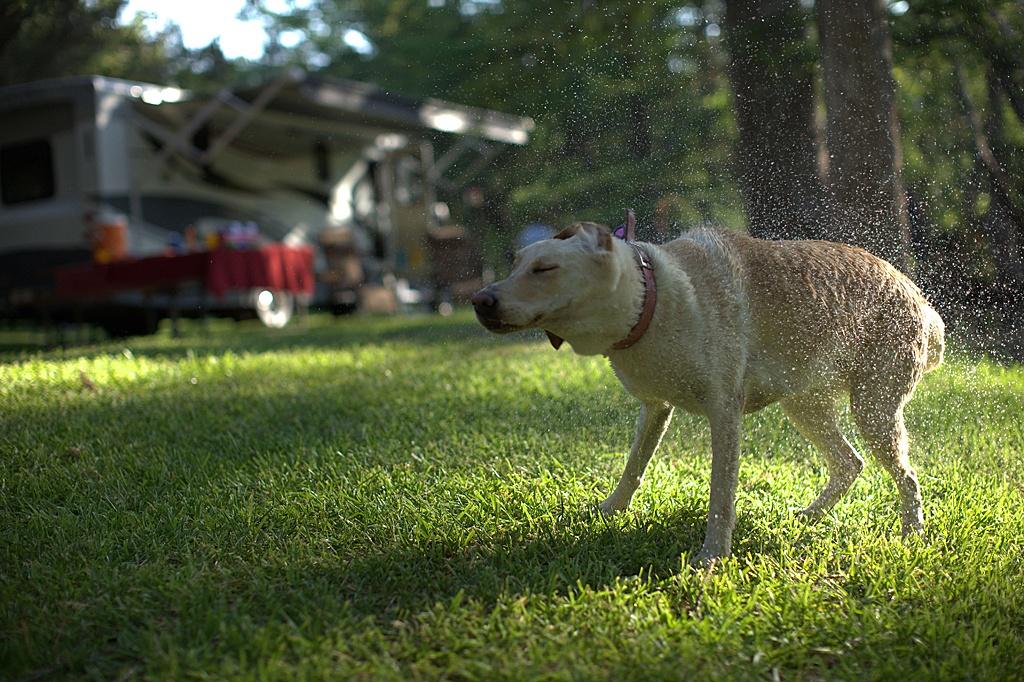 Dog Shaking Water Type C Web