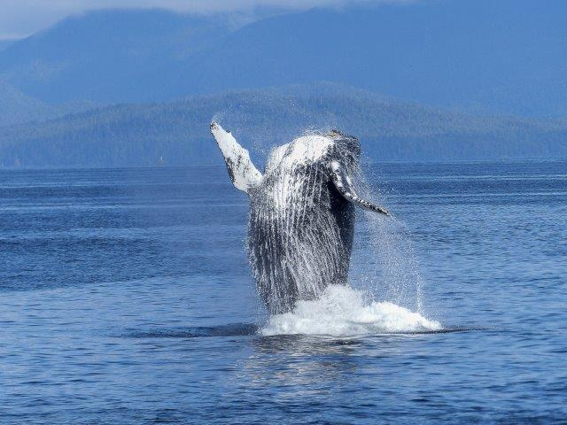 whale watching quebec rv camping whale watching canada best time