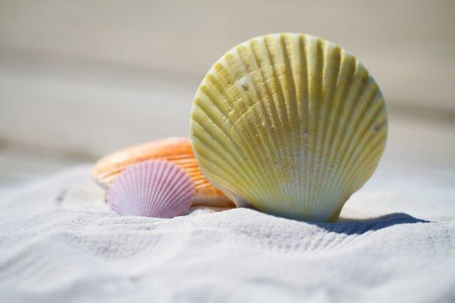 Shell sculpture.jpg