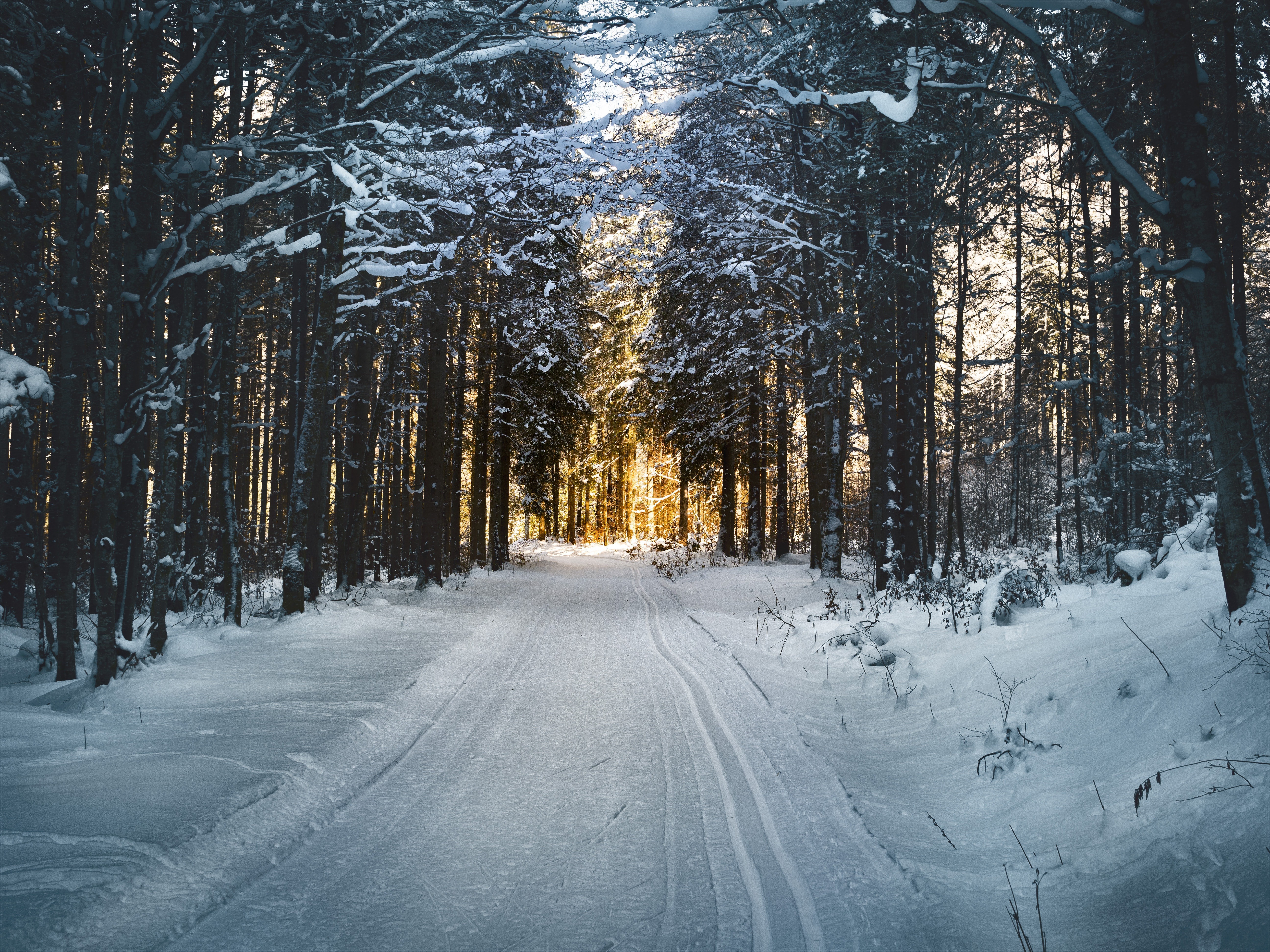 cold-colors-forest-688660