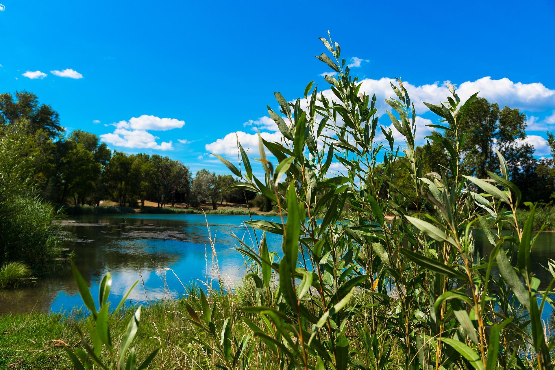 willow lake.jpg
