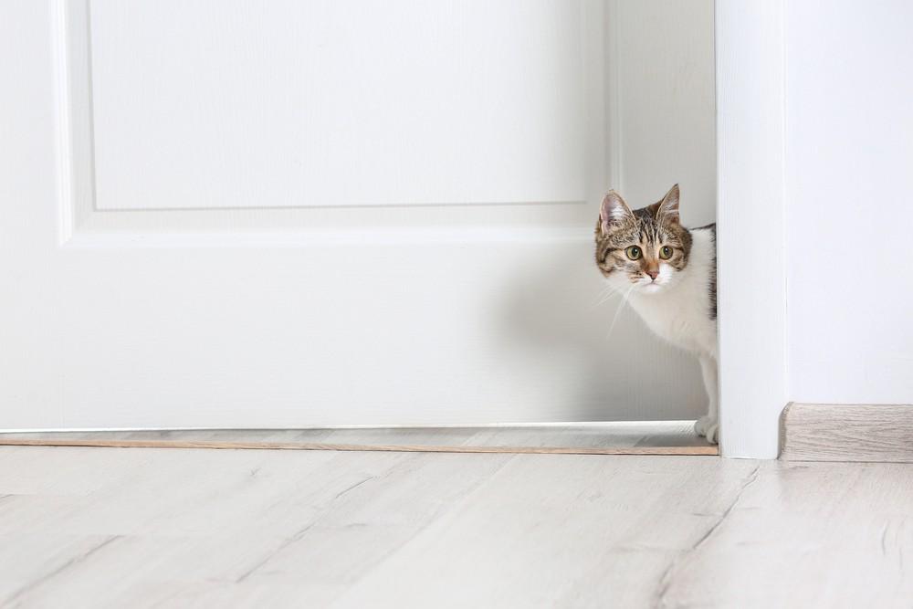 cat hiding on the step of the door