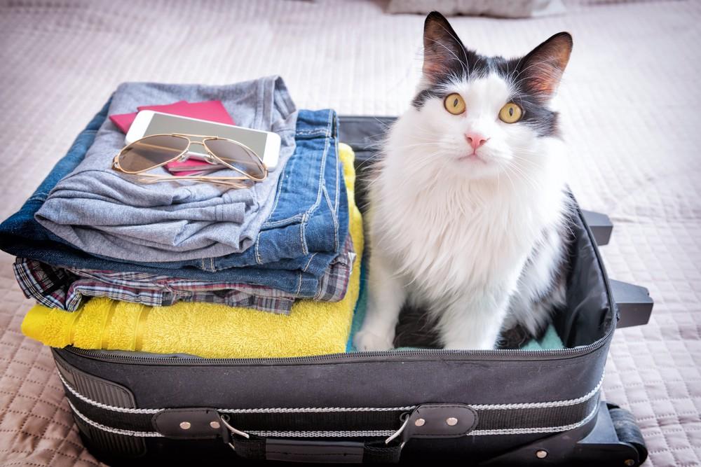 viajar com gatos