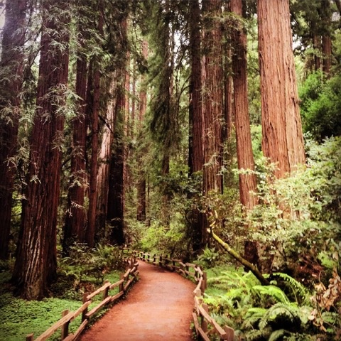 Walking amongst the giants in Muir Woods.