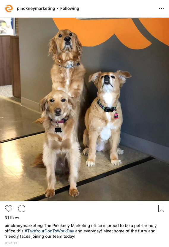 Pinckney pets instagram post
