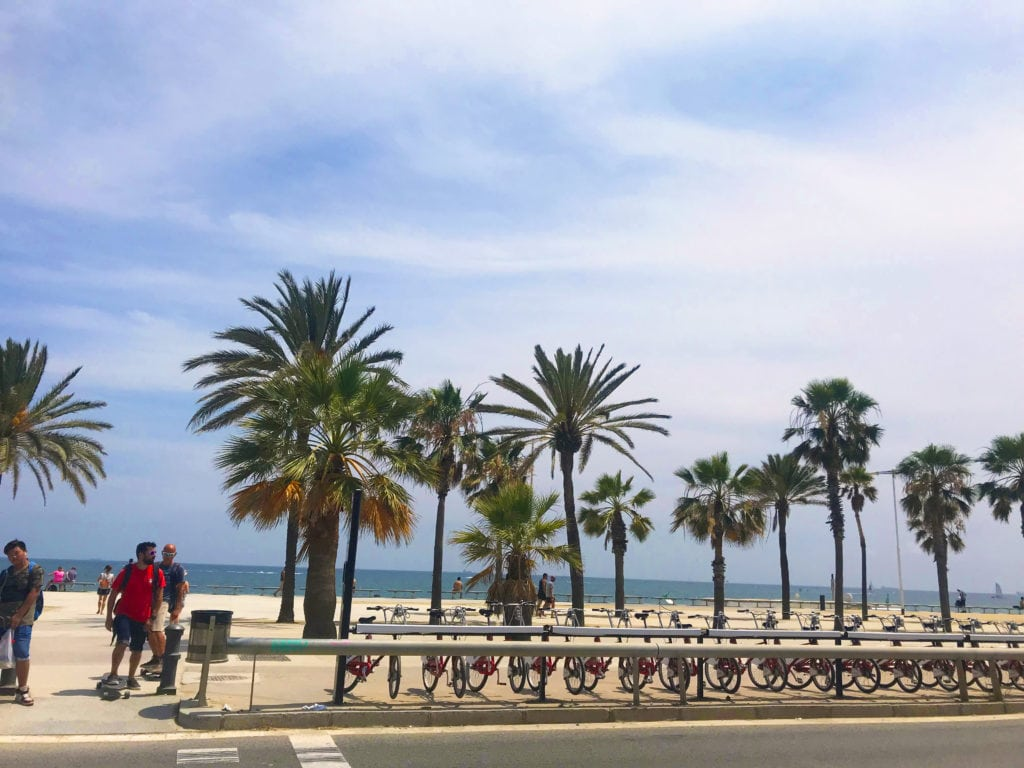 Beachside and palm trees in Barcelona