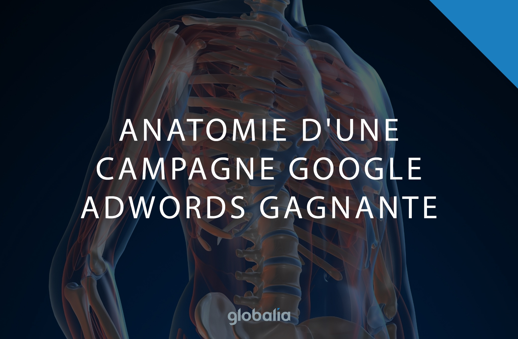 anatomie-adwords.jpg