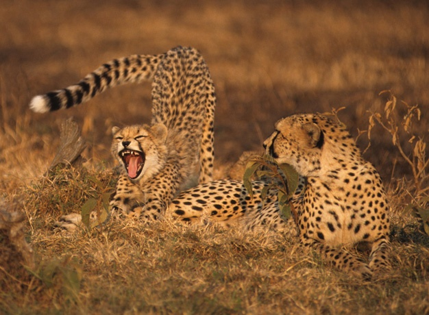 Masai-Mara-Safari-1-1