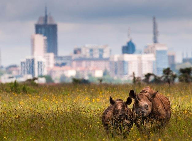 Nairobi-Park-2