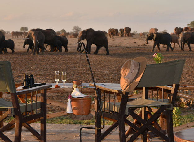 Safari-Camp-View-Elephants