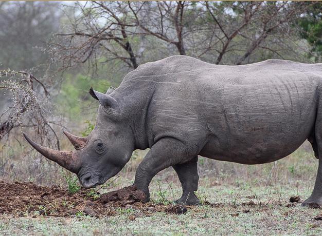 Telling-Rhinos-Apart