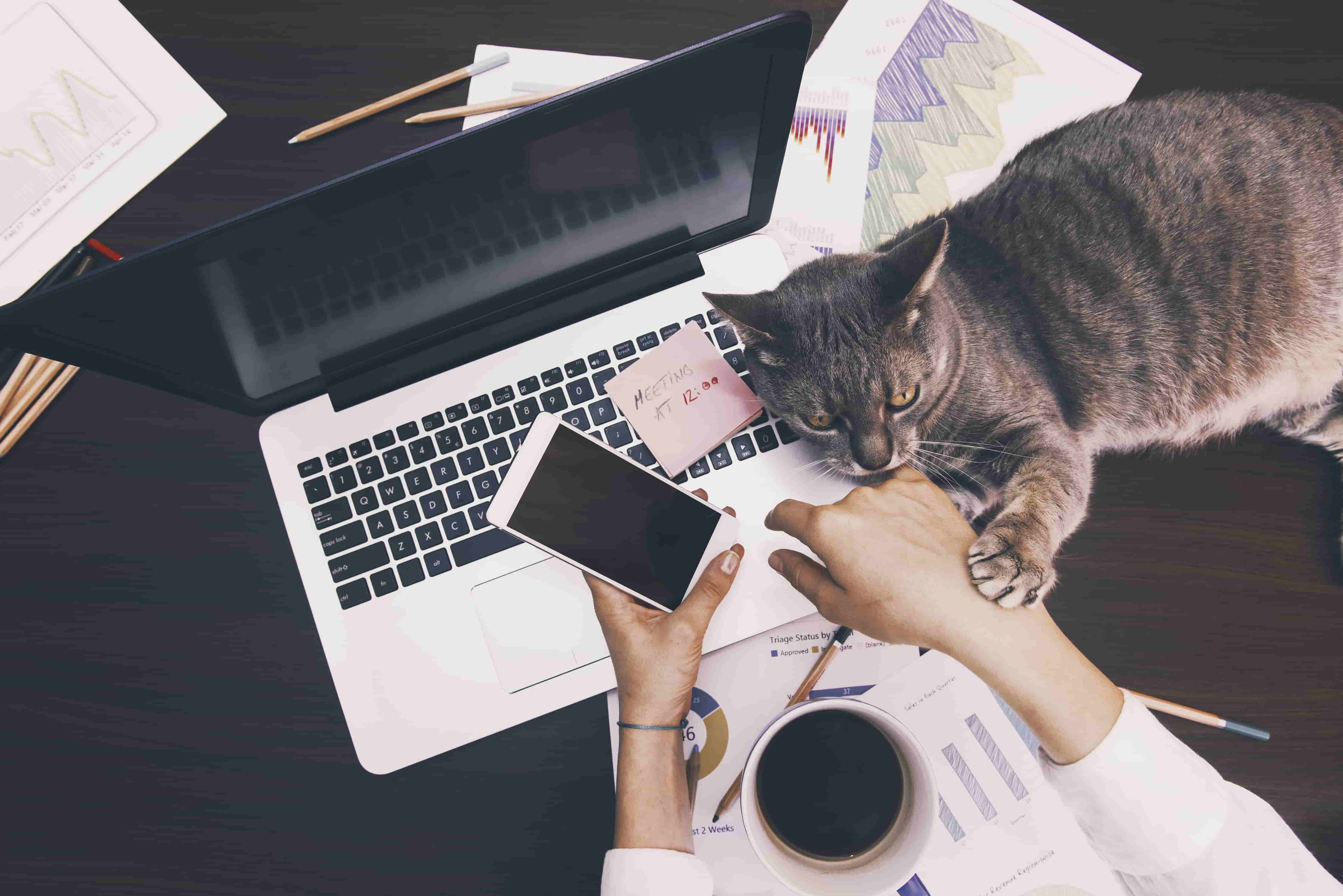 Working from home can be productive with these tips