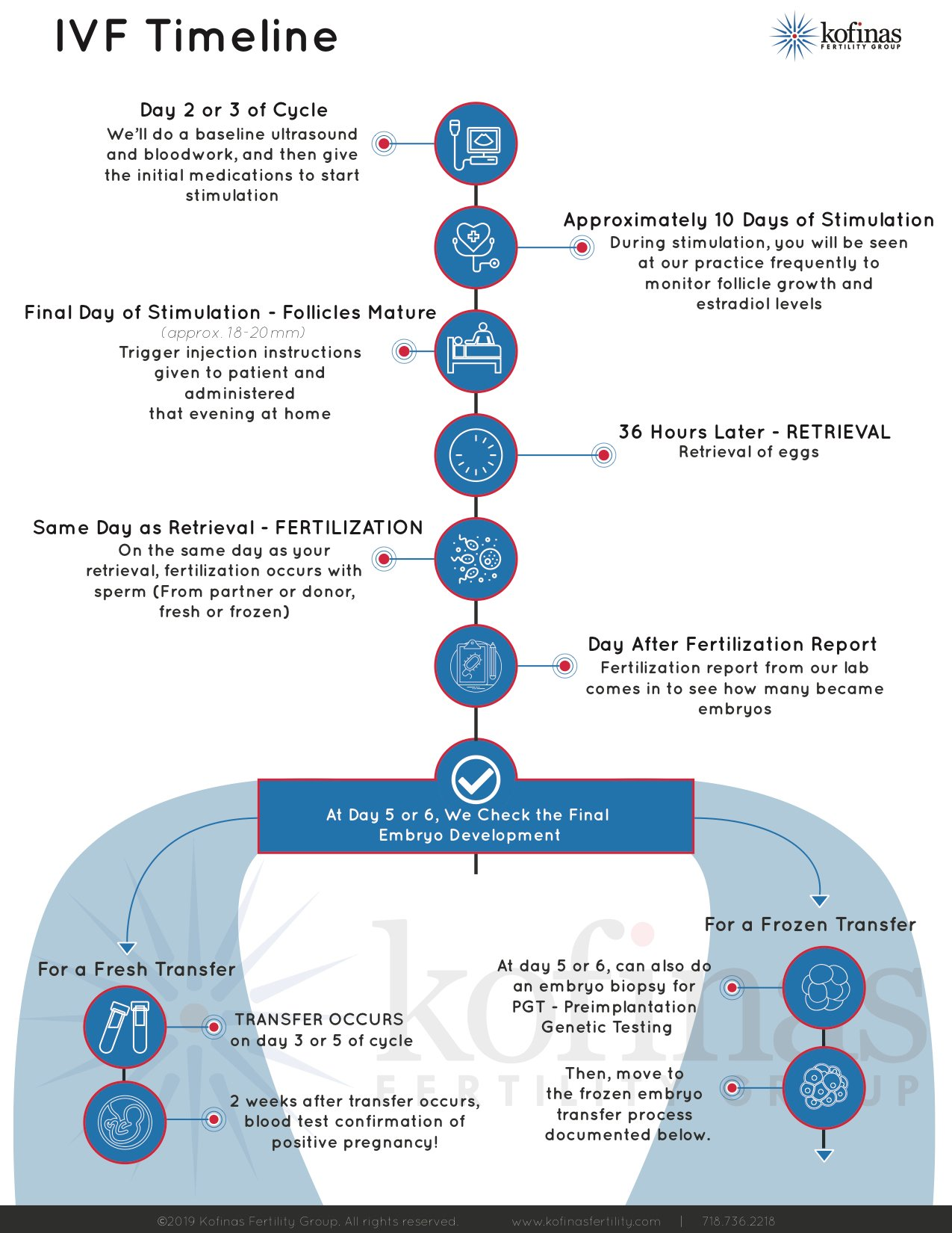 An In Vitro Fertilization Timeline
