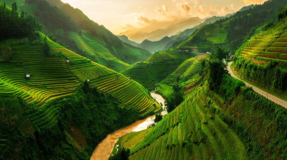 rolling hills and rice paddies with bright green colors reflecting off the sun