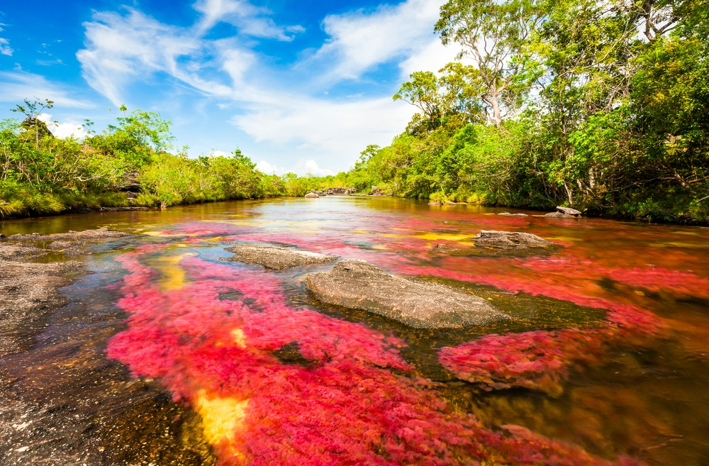 the amazing red waters in the river of caño cristales in colombia