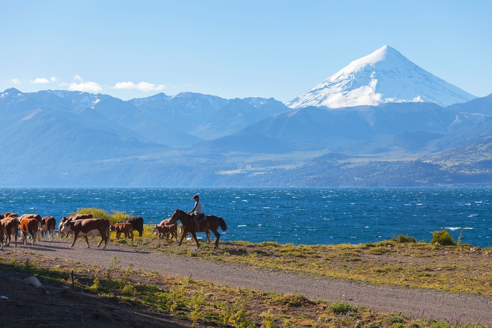 man riding a horse and herding a group of cows near an epic lake and mountains