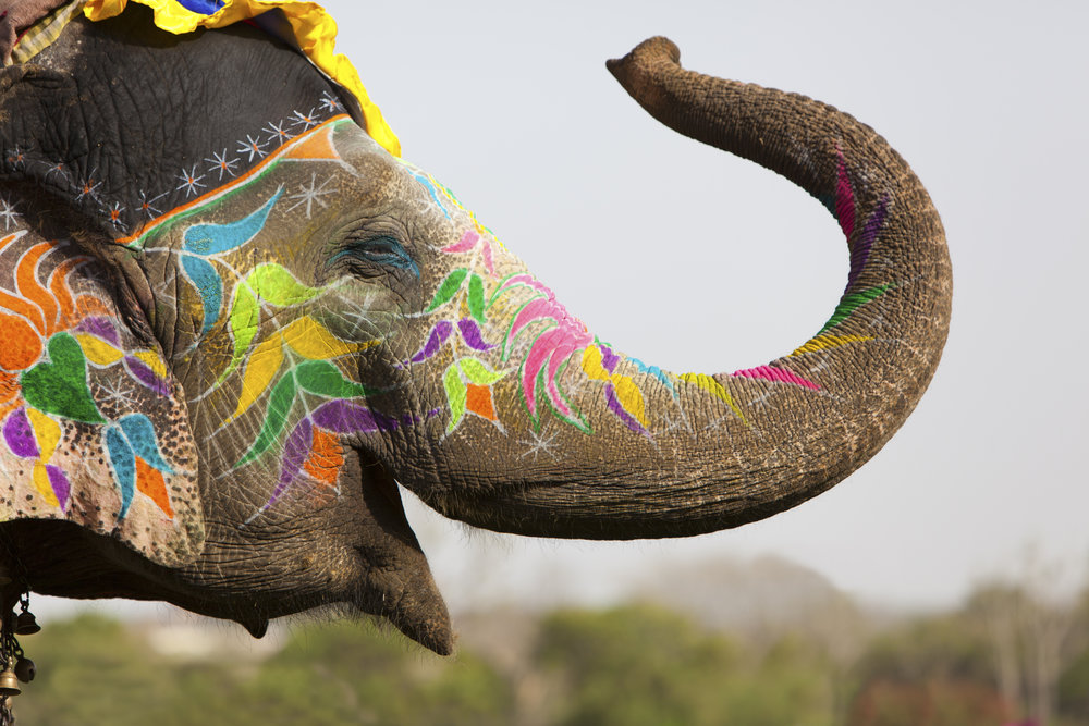 elephant that seems to be smiling with a bunch of colors drawn on it