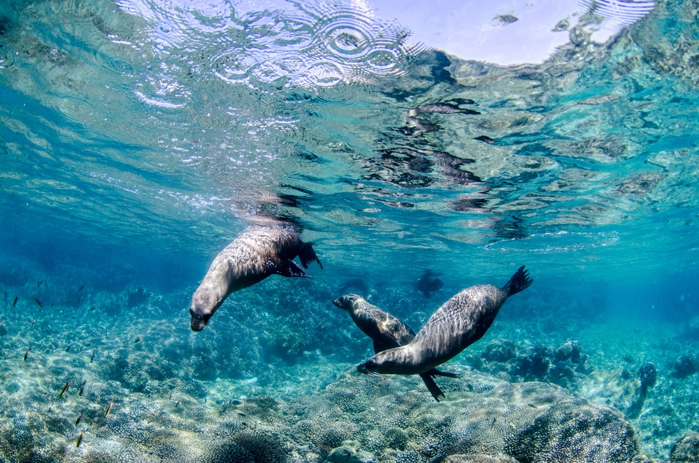 sea lions under the water in baja california