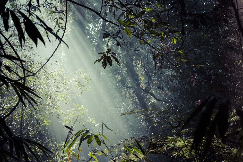 sunlight filtering through trees i a forest