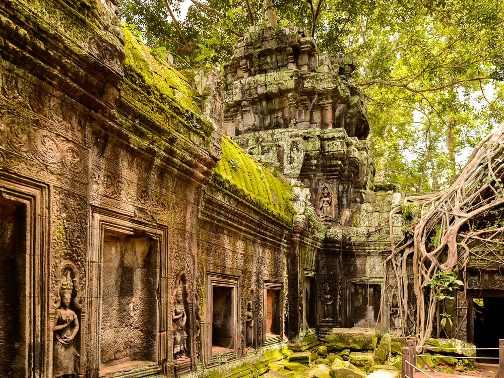 monastery in cambodia surrounded by green plants and moss and tree roots