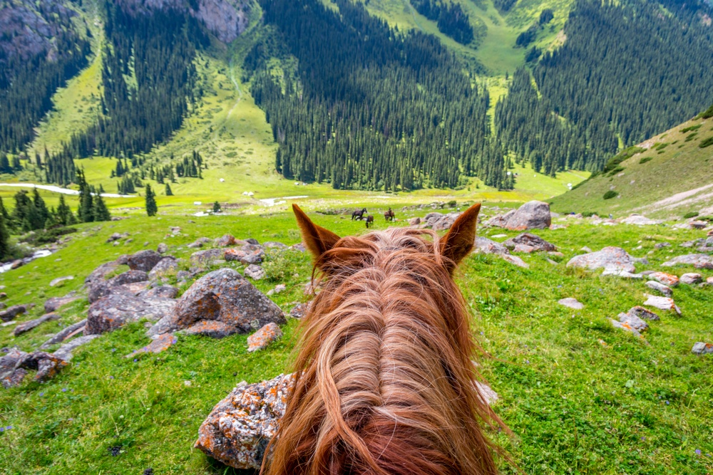 horse riding through the hills of kyrgyzstan