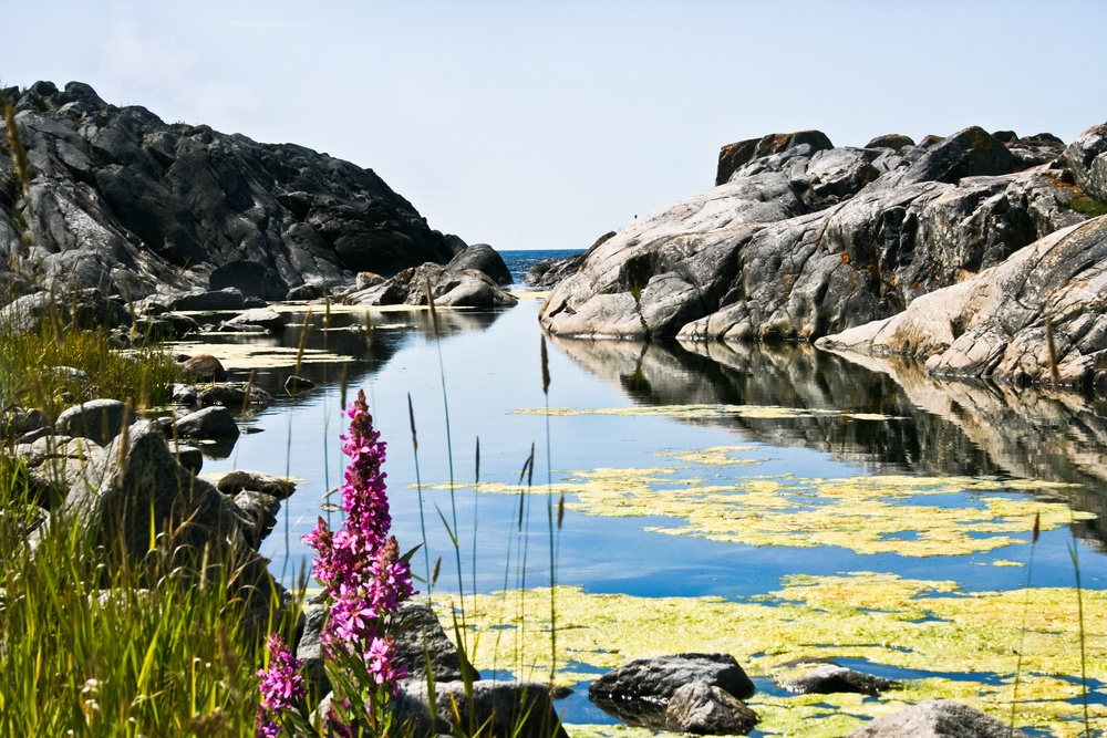nice natural scenery with rocks and flowers in stockholm's archipelago in sweden