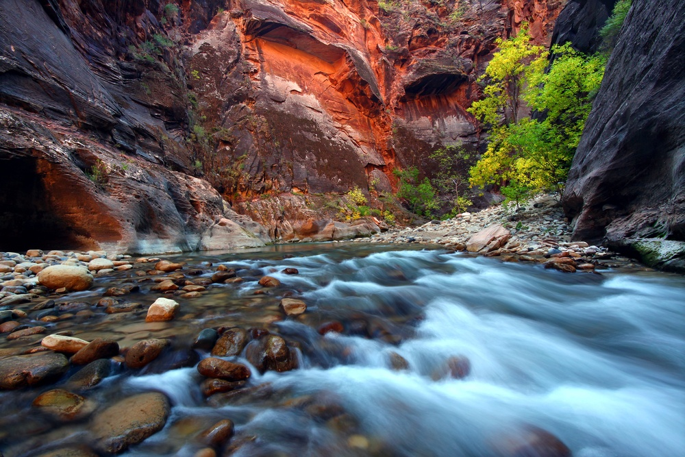 colorful natural scenery with a red canyon rock and river in Zion Utah