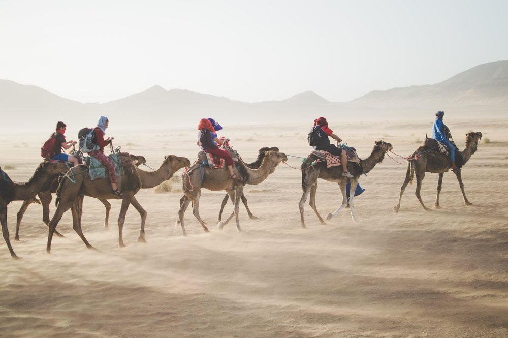 camels riding through the desert on a tour