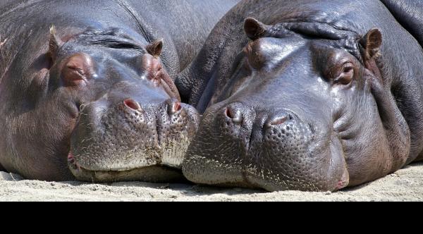 HIPAA_for_hippos